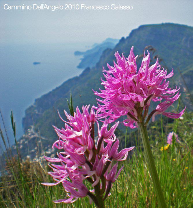 orchidee-cammino-monti-lattari