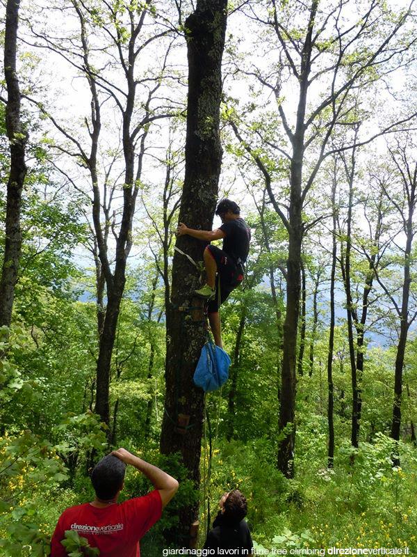 giardinaggio tree climbing campania